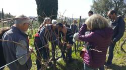 Atelier taille de la vigne