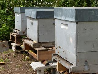 OCTOBRE - Les ruches sont de retour au jardin !