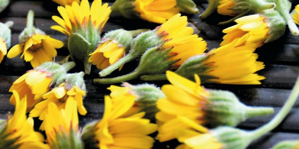 ATELIER : Reconnaître les plantes sauvages comestibles