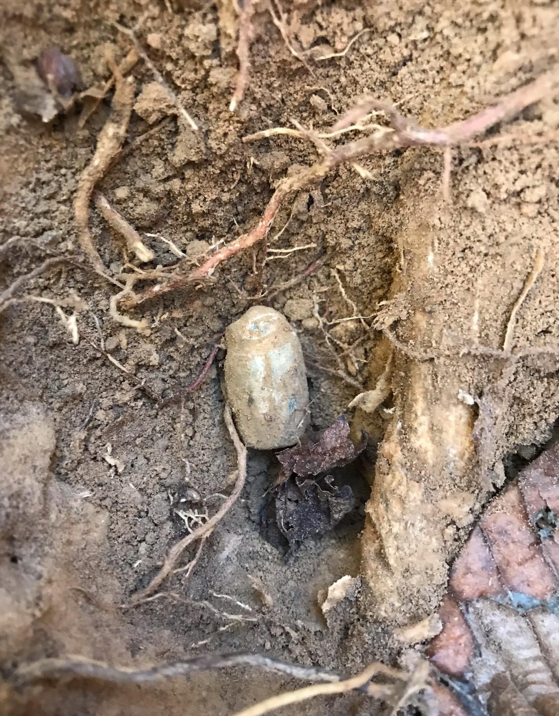 Wormed Enfield bullet