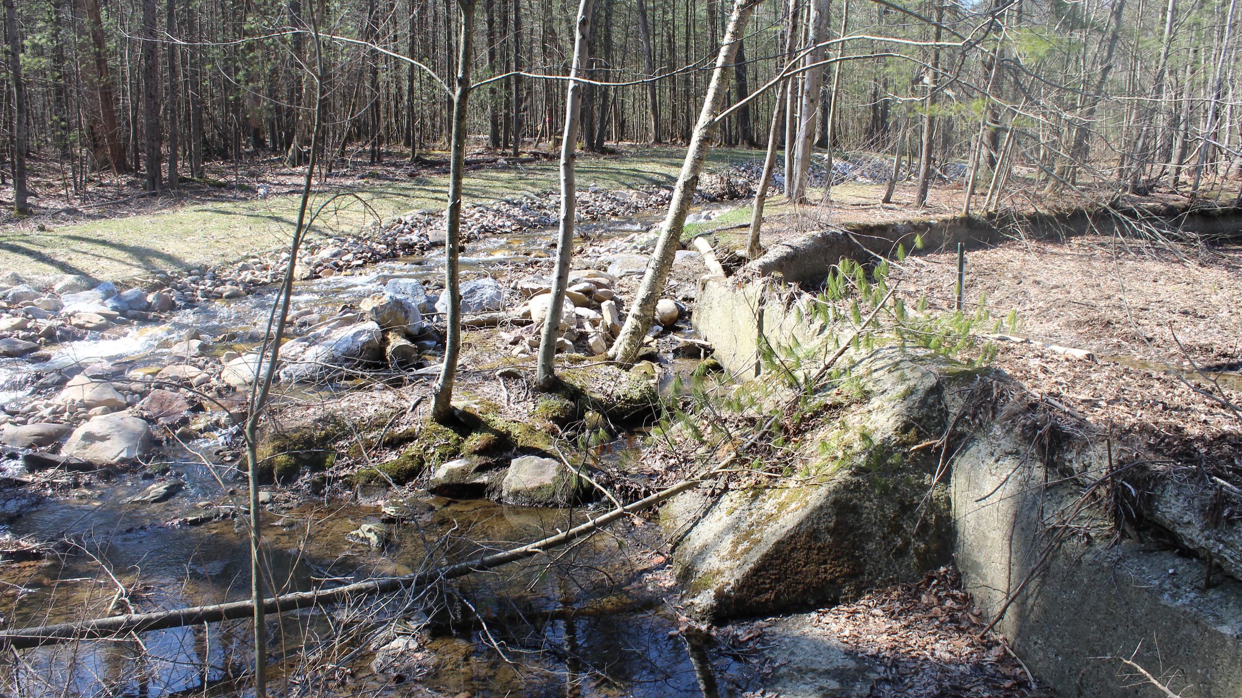 Another Dam along Toms Run