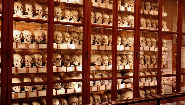 The Hyrtl Skull Collection (photo courtesy of The College of Physicians of Philadelphia and The Mütter Museum, accessed July 11, 2018, http://muttermuseum.org/exhibitions/hyrtl-skull-collection/)