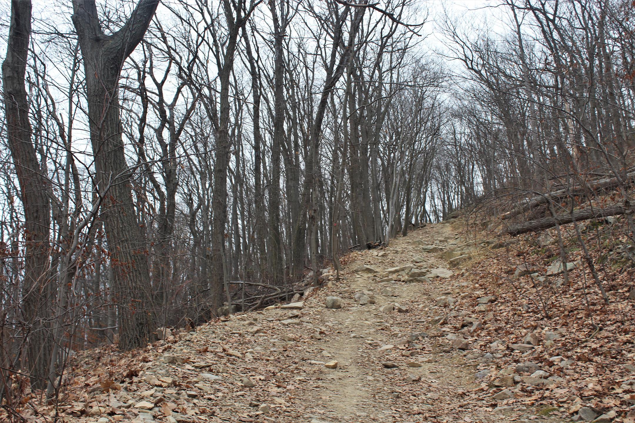 The Casino Trail