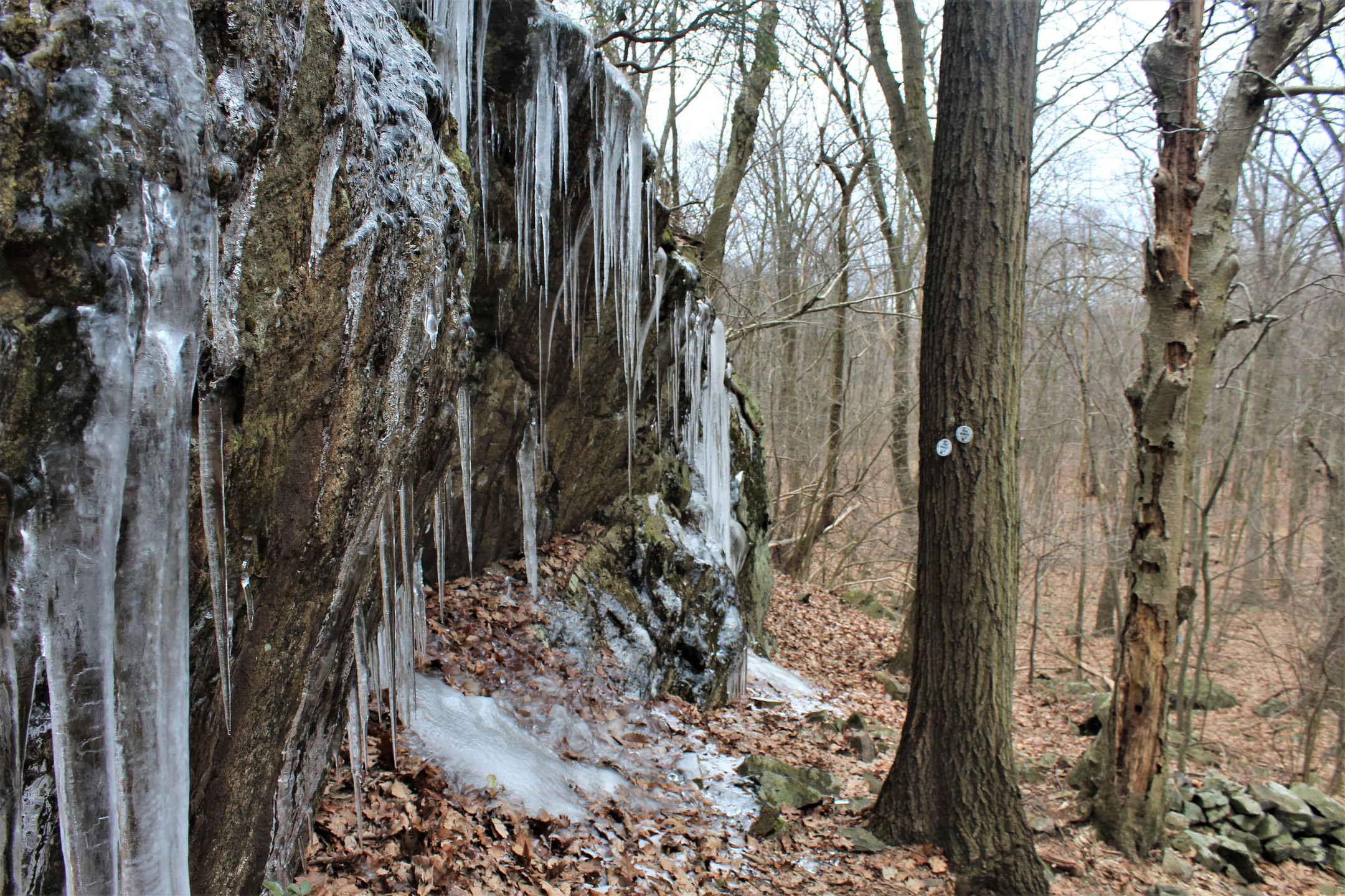 Icicles on the Fishkill Trail