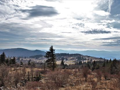 Trail Trials: Mount Rogers