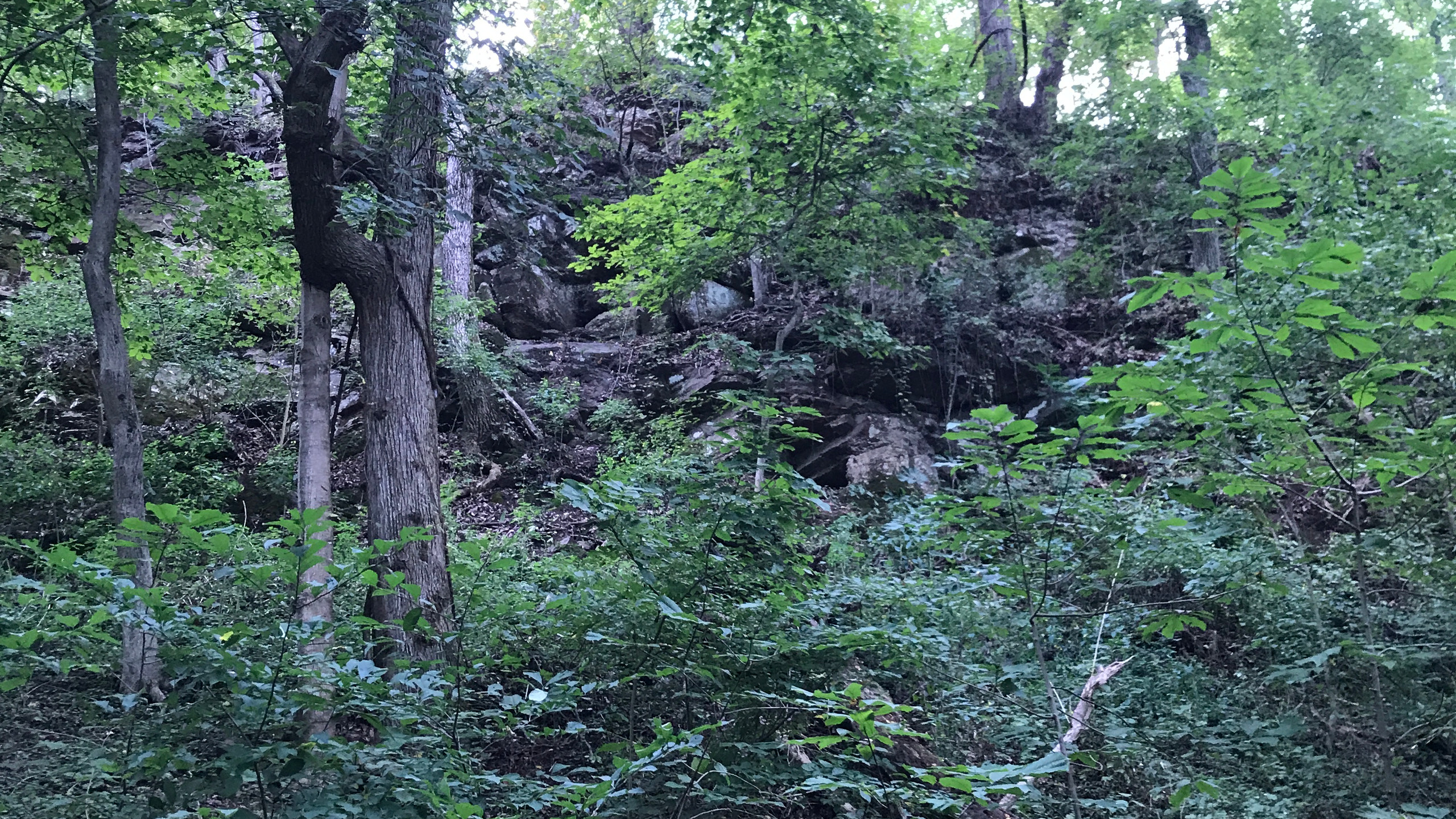 The Bluffs from the Flood Plain
