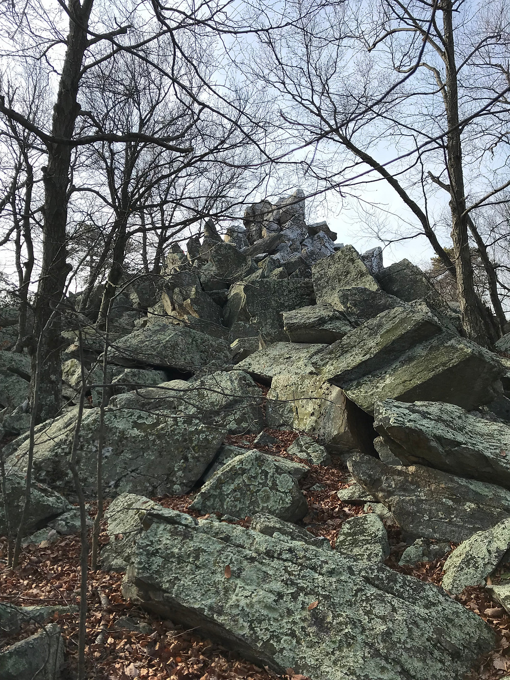 Cat Rock Scramble