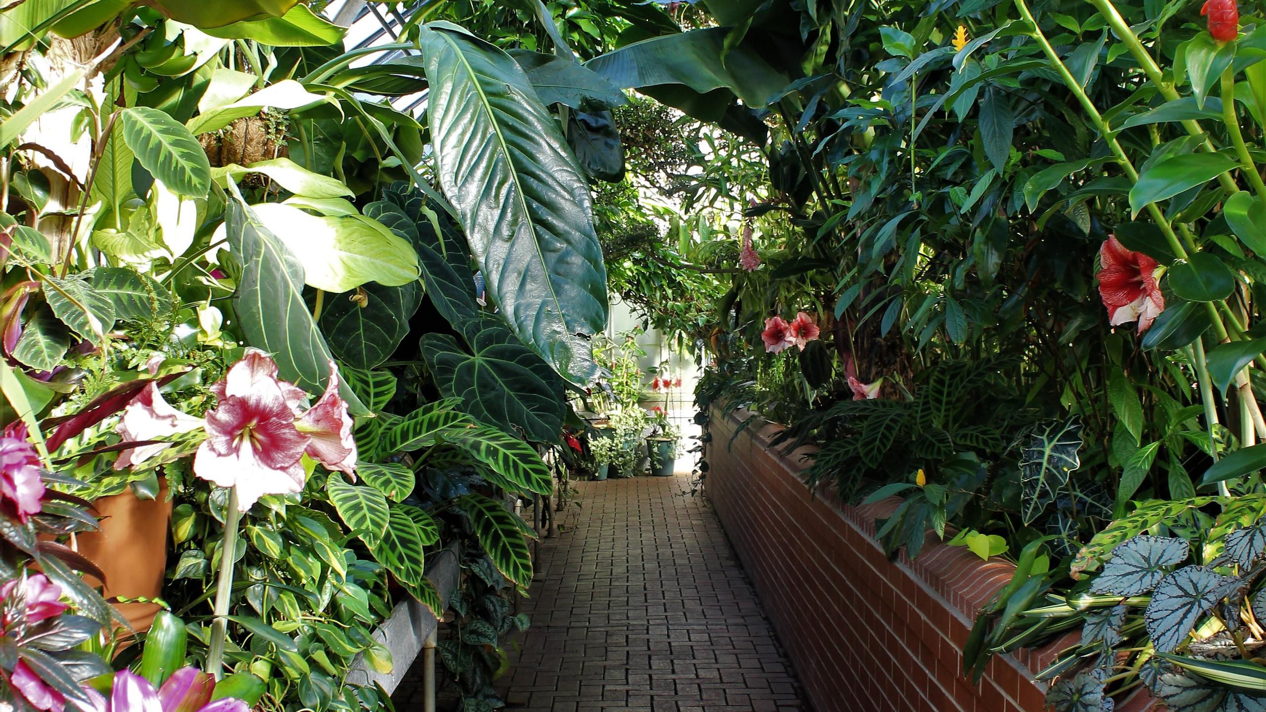 Vegetation in the Conservancy