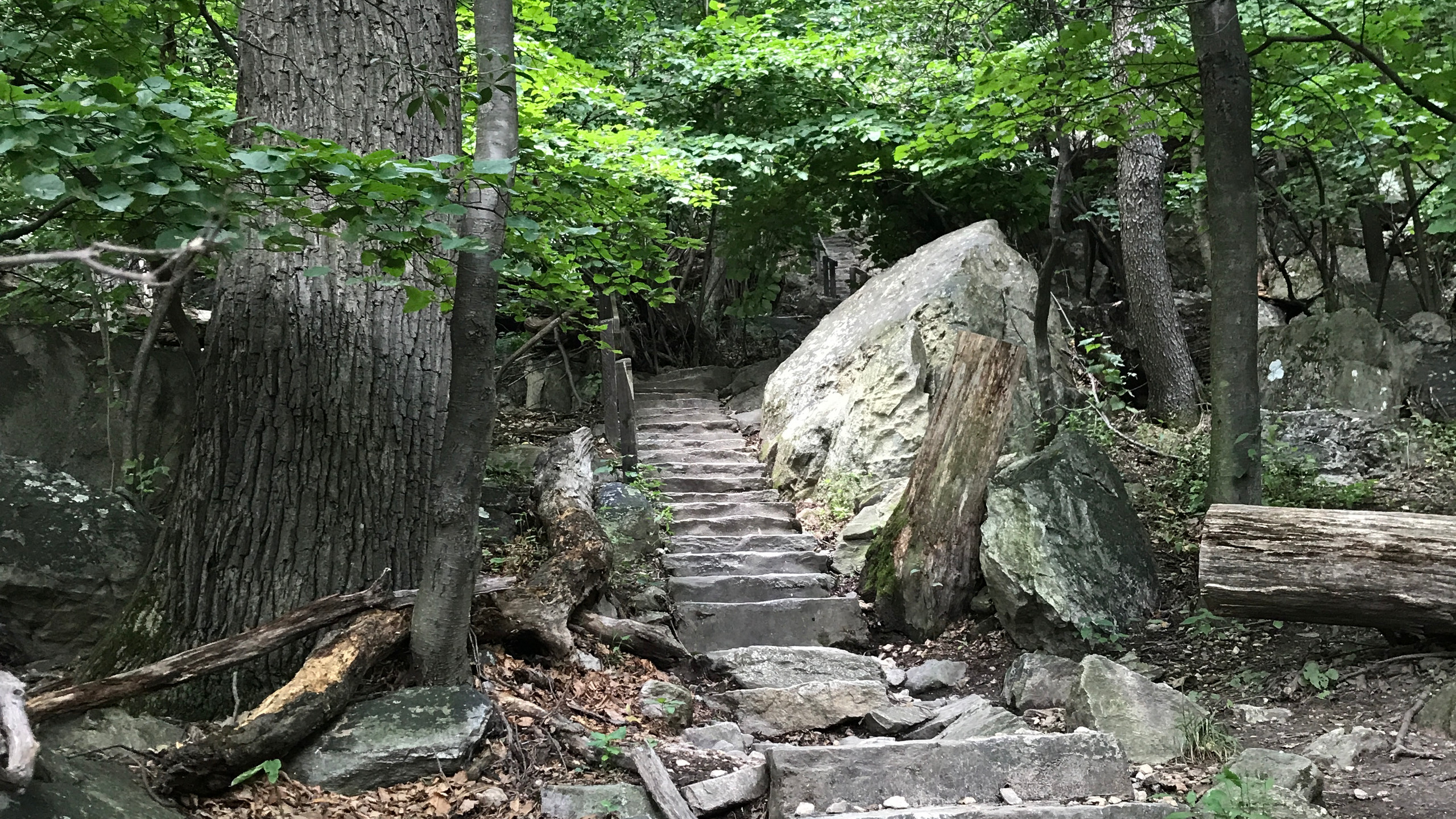 Stairs of the Green Trail