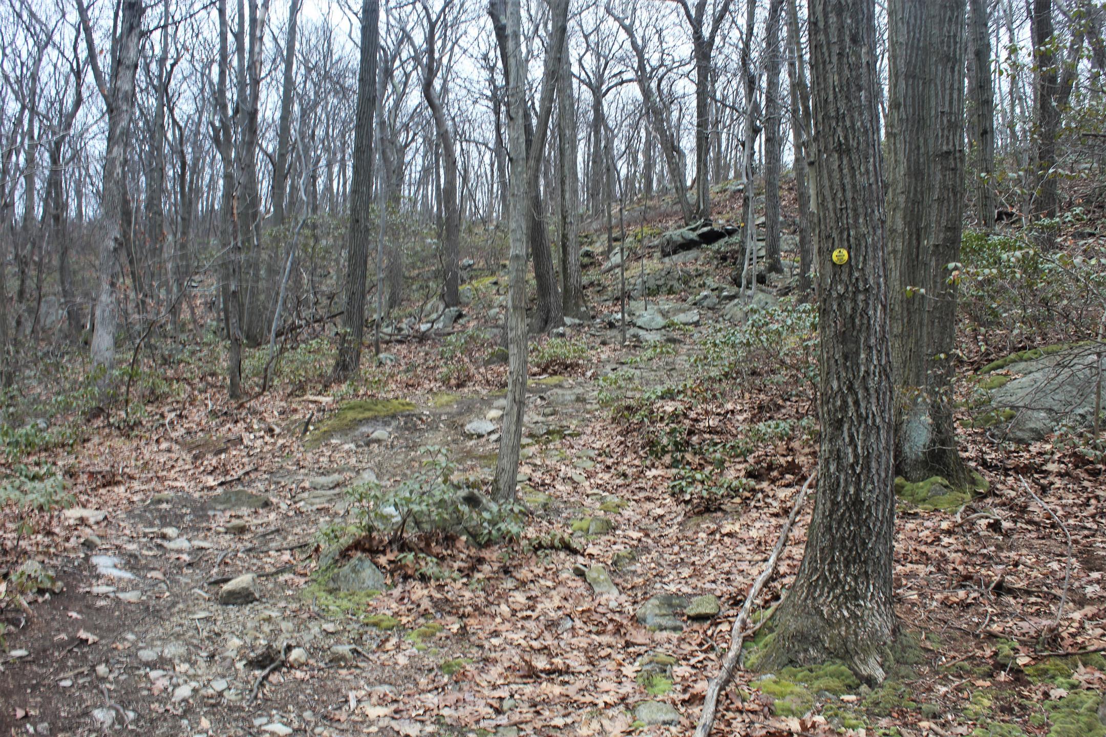 Wilkinson Trail