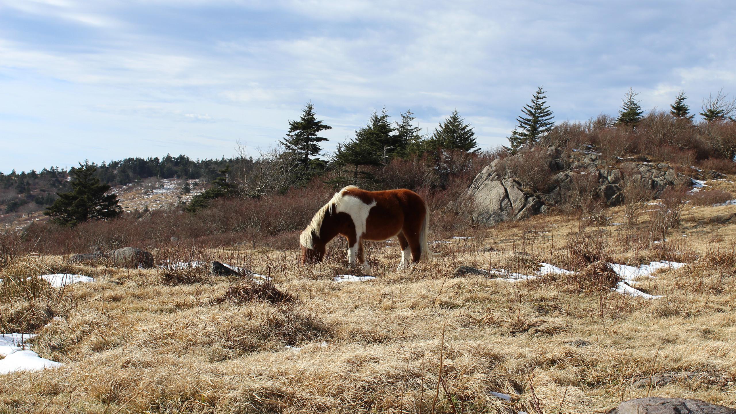 Lone Pony