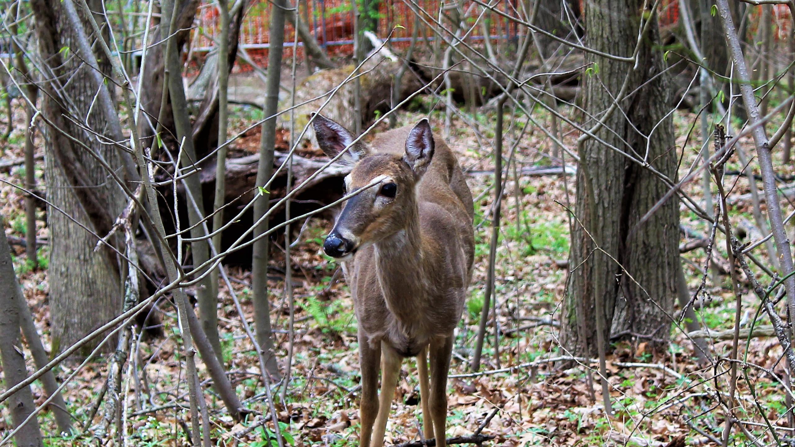 Wildlife at Great Falls