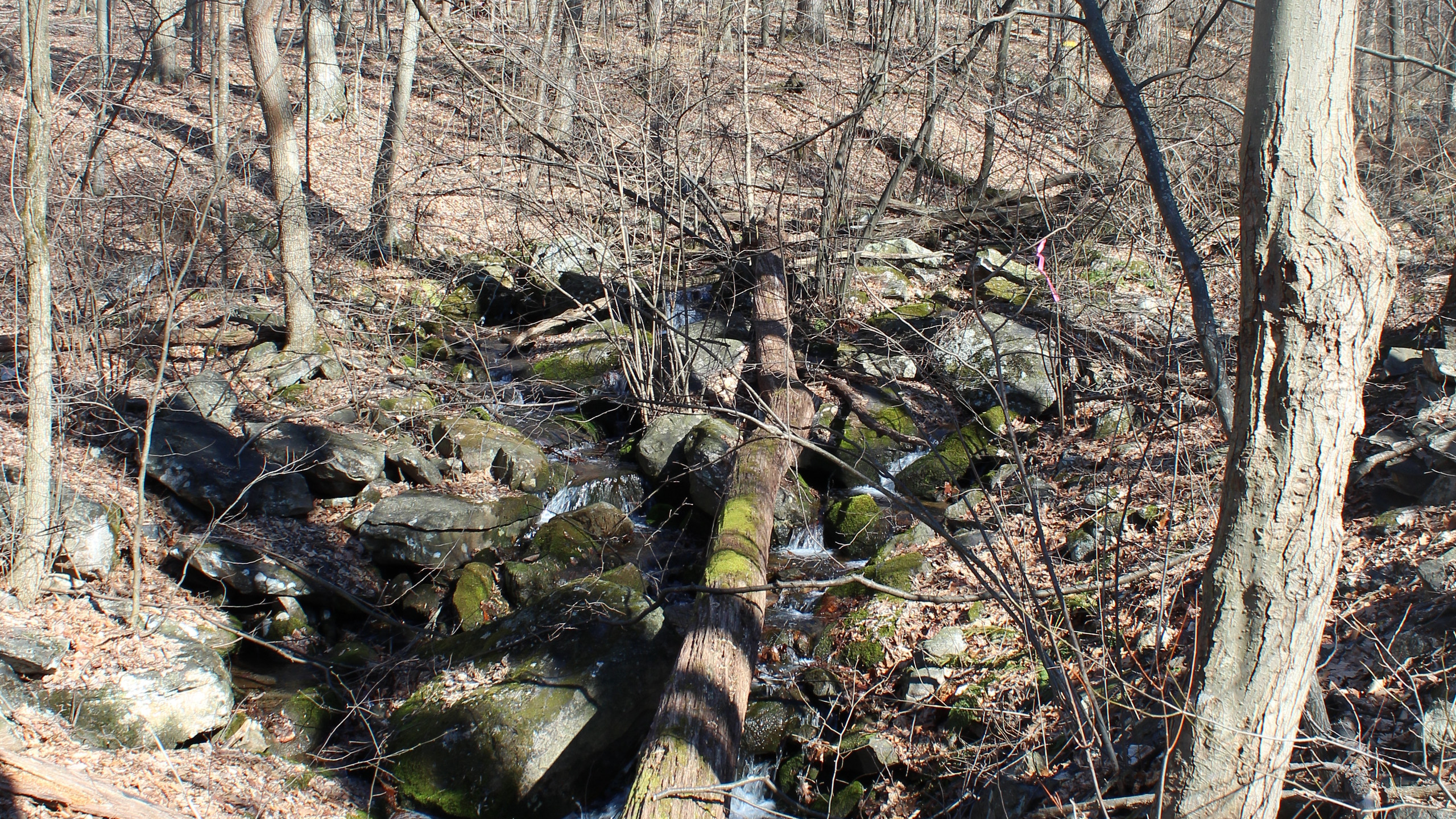 Stream next to the Griggs Trail