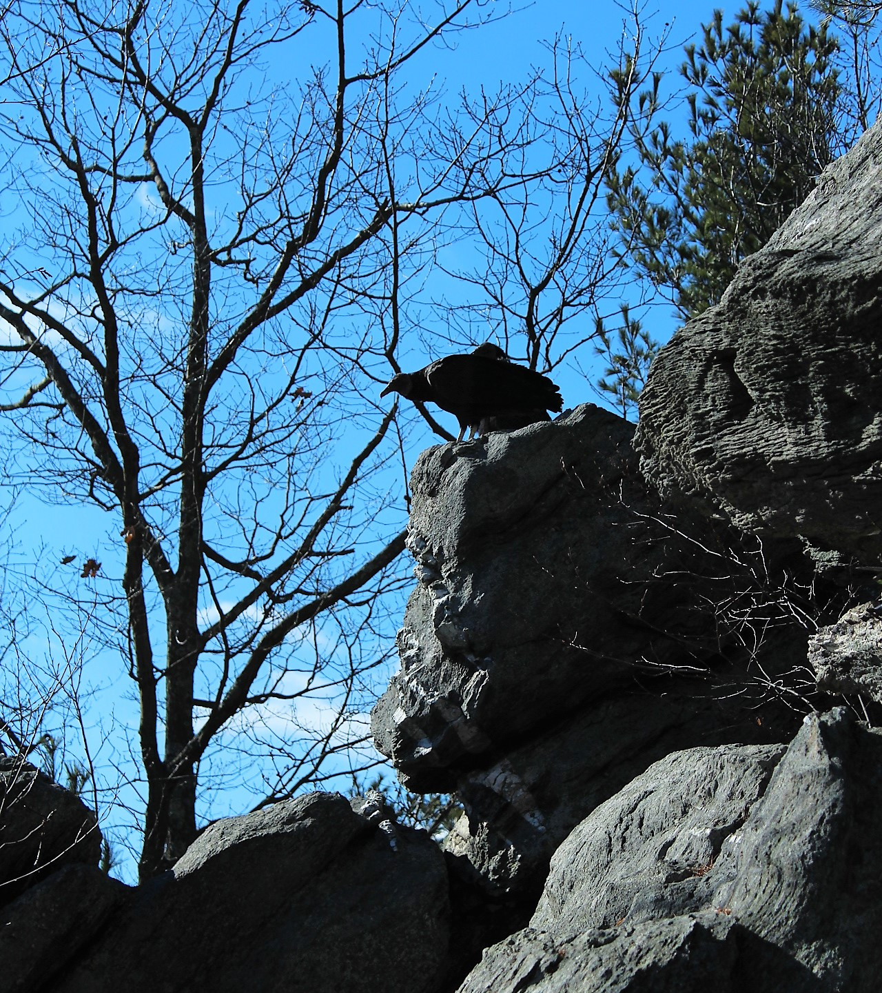 Vultures Perched on the Rocks