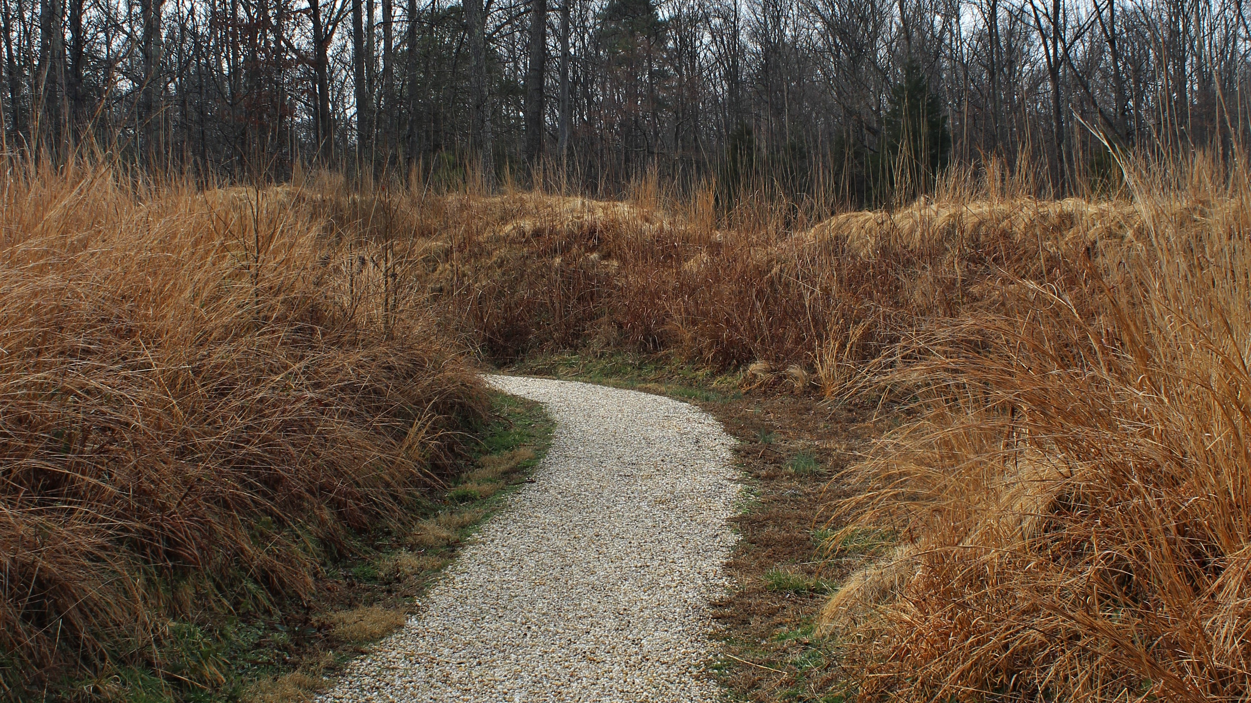 Footpath at Fort Harrison