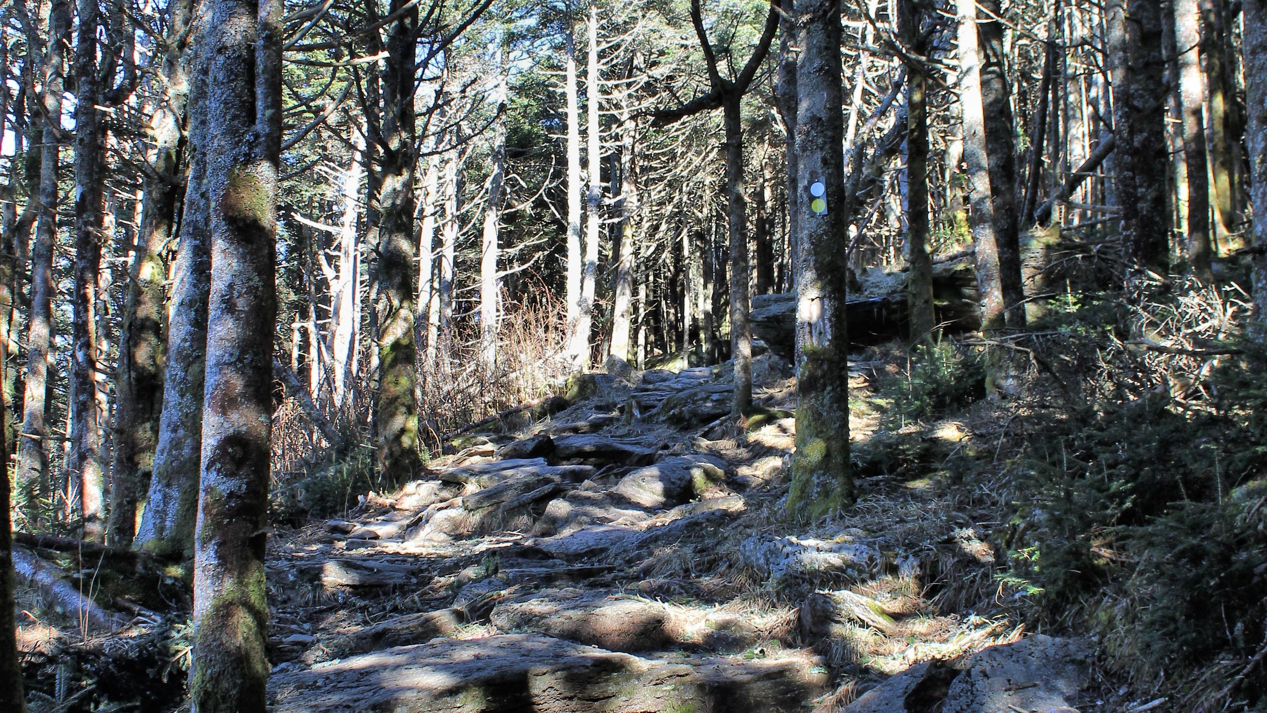 Steep Stretch of Trail