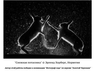 """Лучшие фотографии конкурса """"Золотая Черепаха""""-2017"""