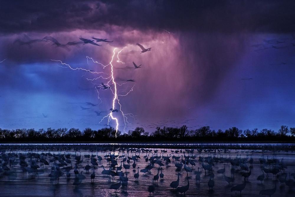 Лучшая фотография года — Журавли. Автор фото: Рэнди Олсон. Местоположение: Вуд-Ривер, Небраска, США.