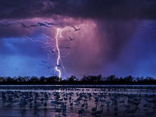 Красивейшие фотографии природы с фотоконкурса Siena International Photo Awards 2017