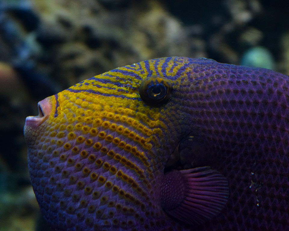 PurpleFish