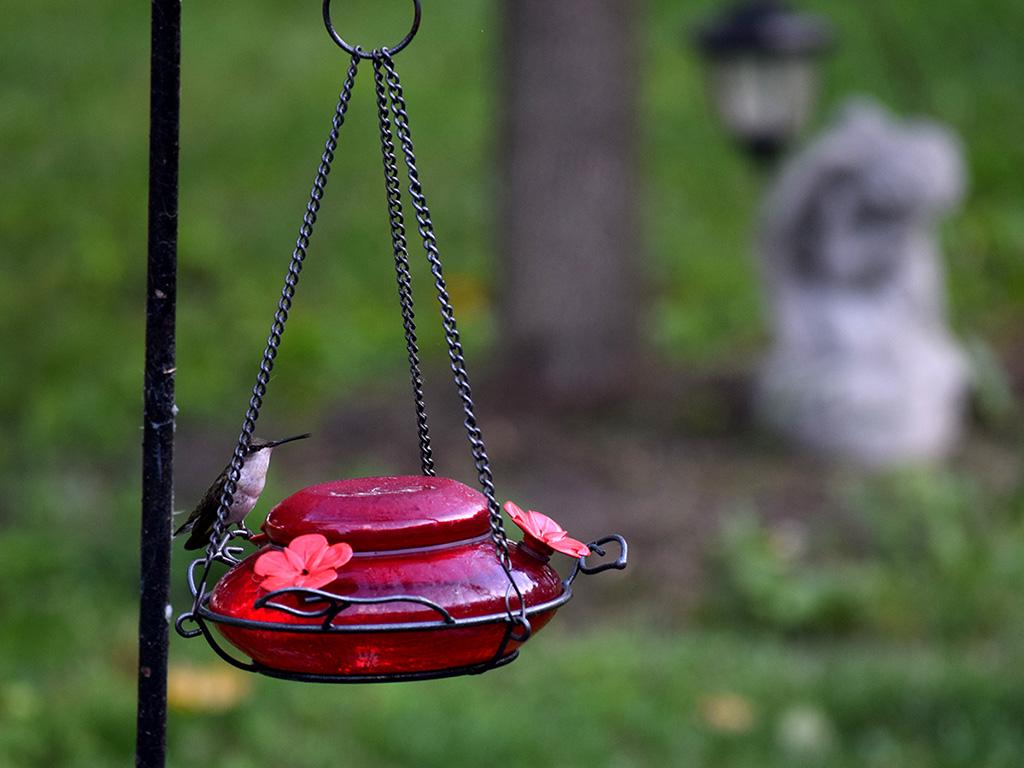 Hummingbird Noms