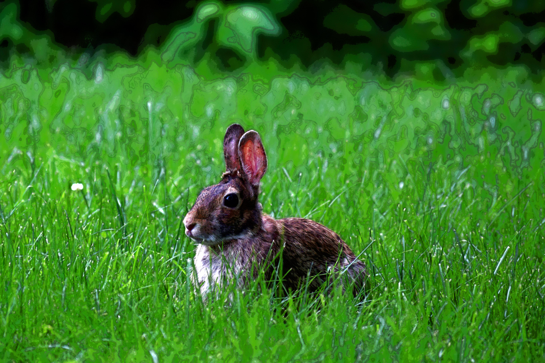 Yard Bunny02