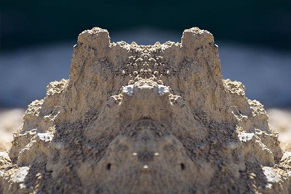 Dirt Croc