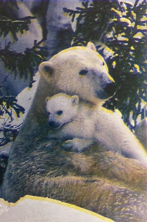Polar Bears 28*40