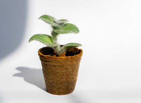 O que são os 4 R's da sustentabilidade?