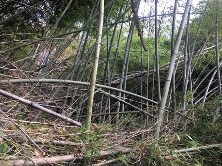 竹林は、コンビニであり、エンタテイメントである。