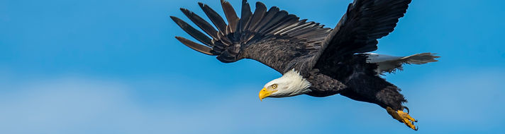 an-eagle-flying-in-the-sky-3250638.jpg
