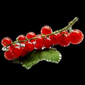 rote Johannisbeere, Johannisbeere, rote, , leckere Beeren, Hertells Beerendorf, Beerendorf, Hertell,, selber pflücken, selbstpflücke, region Hannover,