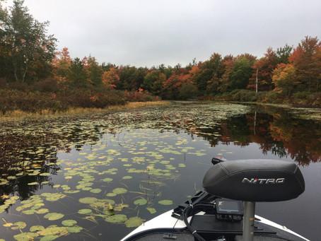 WMASS FISHING REPORT: 10/1/2020