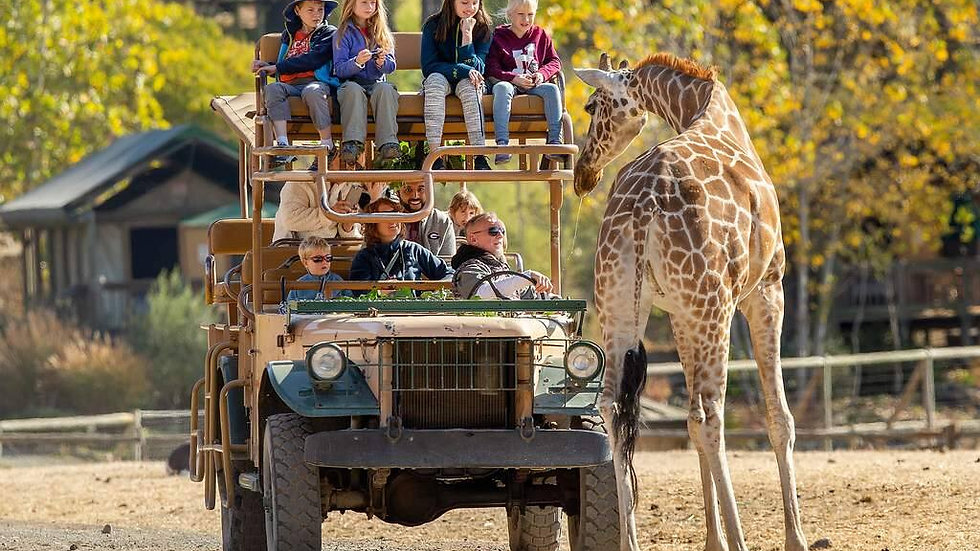 Safari West Family Adventure - COMING SOON!