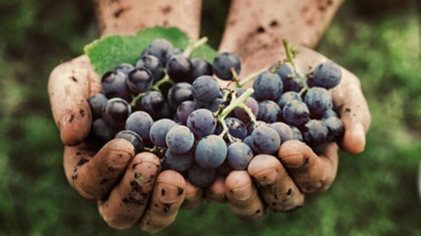 Viticultural Winery Tour & Tasting (for 4)