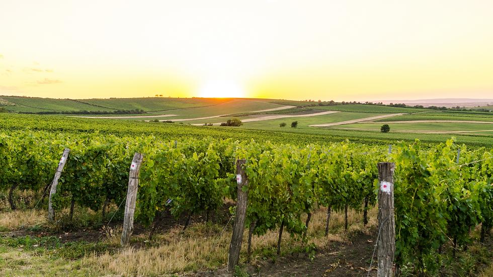 Top Winemaker Series (for 8)