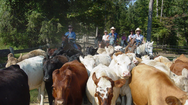 Should've Been A Cowboy - Cattle Drive (for 2)