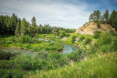 spring creek.webp