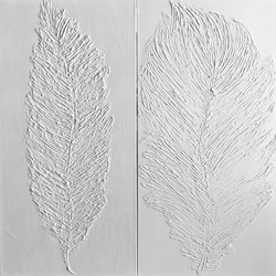 feathers in white