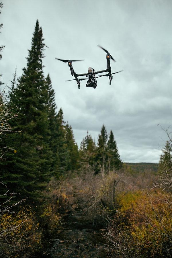 drone in woods.jpg