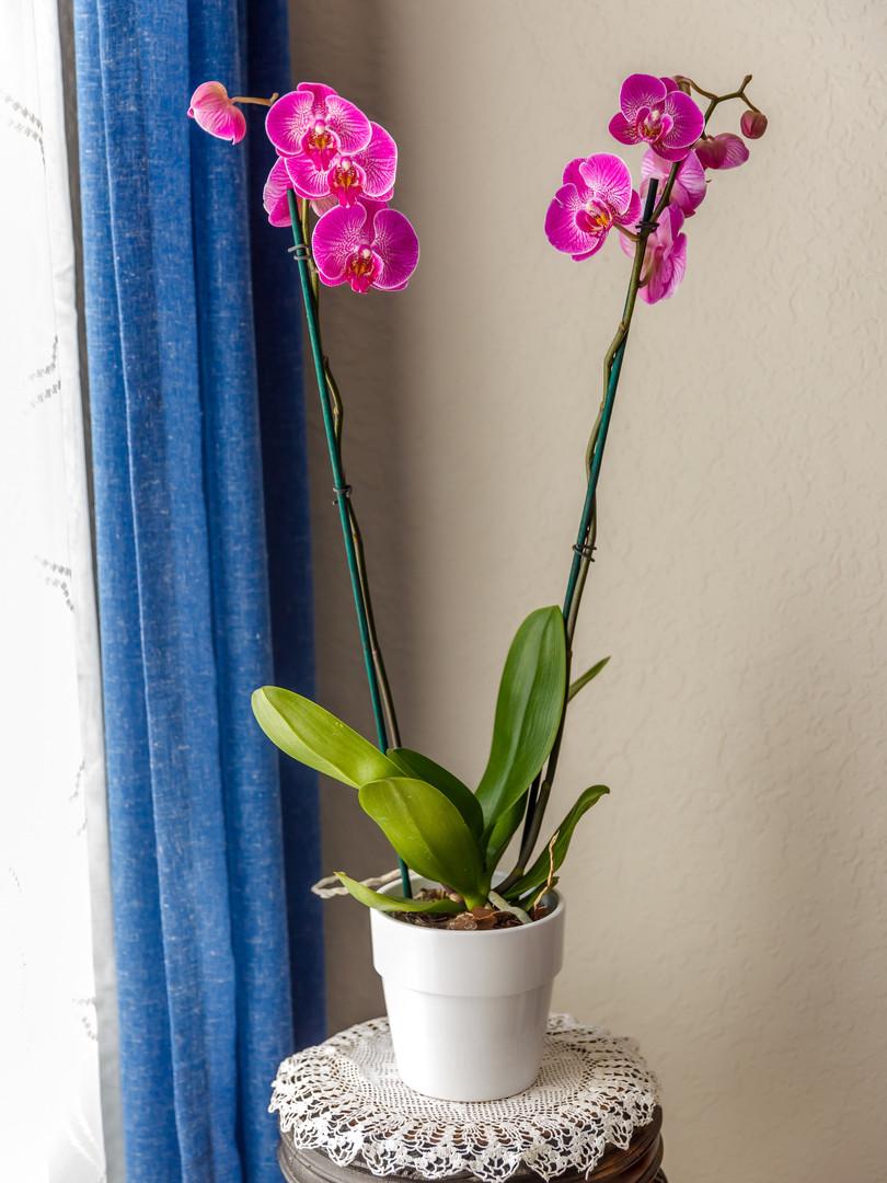 HIRA Office_Orchid.jpg