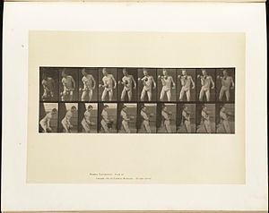 Animal locomotion. Plate 324 (Boston Public Li...