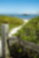 Picture of a path through the sea grapes to the shore toward Anna Maria City Pier as a fine art print for the wall of your home or office.