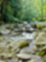 Picture of stream flowing through the Chimney Tops picnic ground in the Great Smoky Mountains as a fine art nature print for the wall of your home or office.