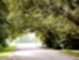 Picture of a rural Hillsborough County, Florida road overhung with oak trees as a fine art nature print for the wall of your home or office.