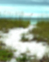 Picture of a path leading to a beach on the Gulf Of Mexico in Greer Island Park, Florida as a fine art nature print for the wall of your home or office.