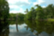 Picture of the Withlacoochee River from the Iron Bridge Recreation Area in Florida as a fine art print for the wall of your home or office.