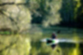 Picture of a Kayaking fisherman on the Hillsborough River in Tampa, Florida's John Sargent Park as a fine art print for the wall of your home or office.