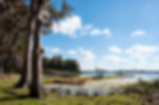 Picture of Lake Rousseau looking south from the Emerald Cove RV Resort in Levy County, Florida as a fine art print for the walls of your home or office.