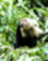 Pictures of primates as fine art nature prints for the wall of your home or office.